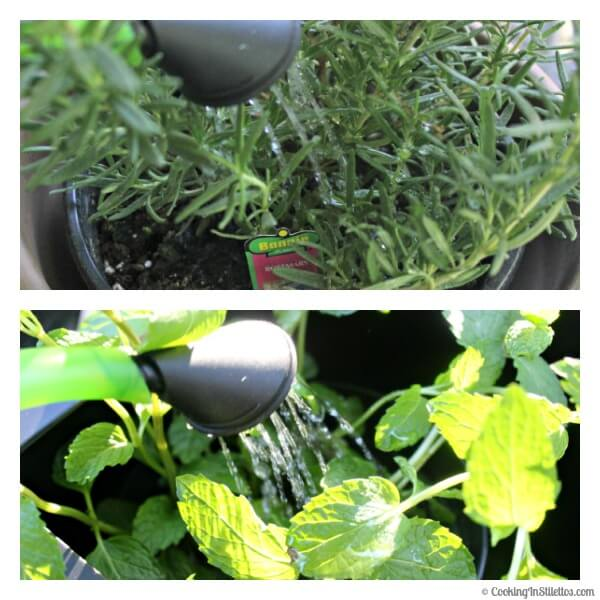 OXO Spring Gardening - Watering the Plants | Cooking In Stilettos